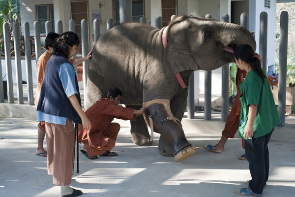 Reportage Elephant Hospital in Thailand